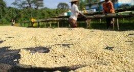 Ethiopia, Hunda Oli Specialty Coffee