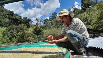 Roasting Micro Lot Honey Coffees in El Salvador