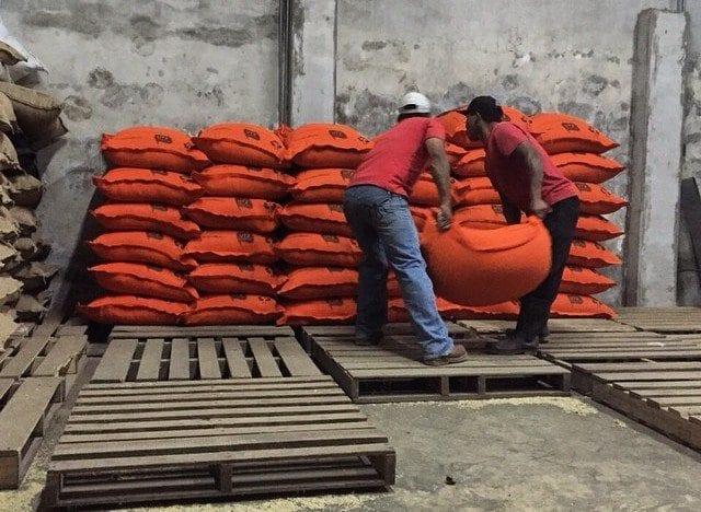 Arranging the green beans for export.  Photo: @fincasantateresa