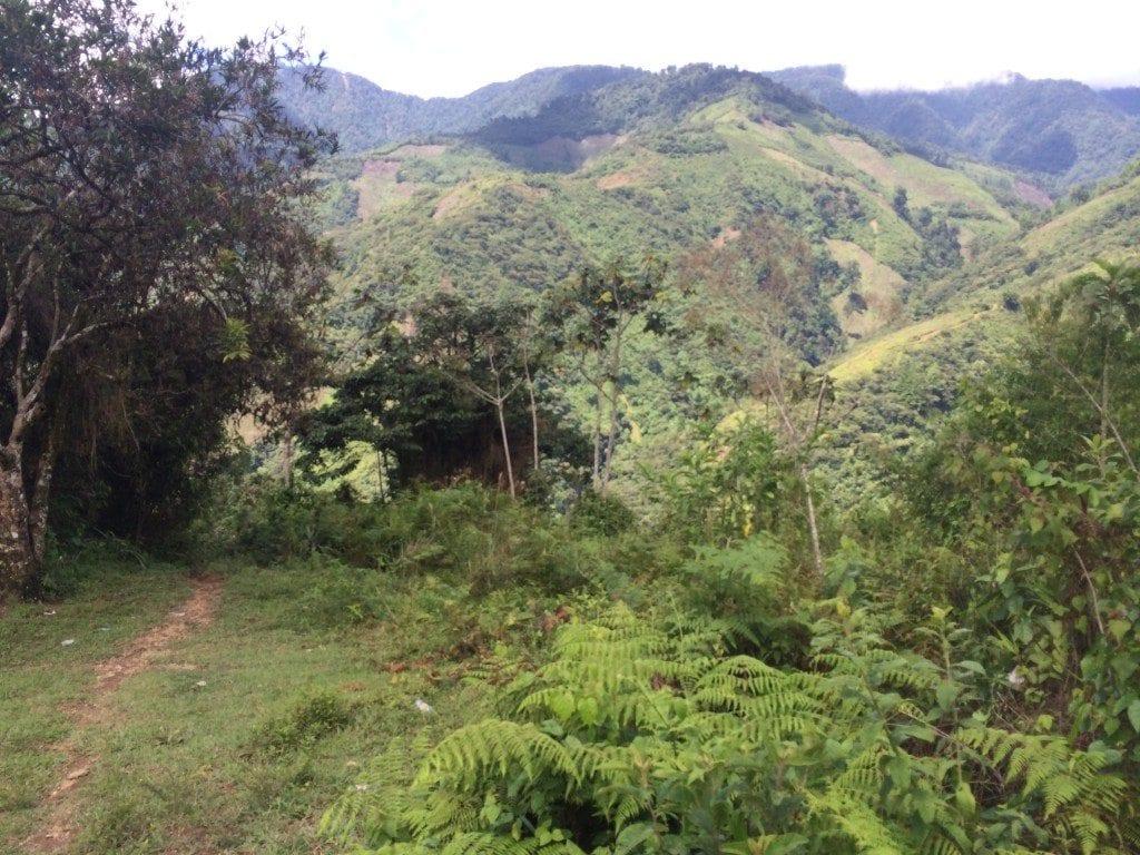 coffee plantation in guatemala natural