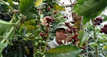 A Day in the Life of a Colombian Cherry Picker