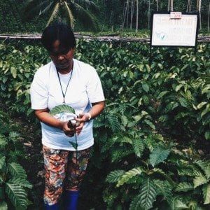 A local farmer splicing a Robusta seedling