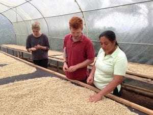 coffee harvesting in Quito