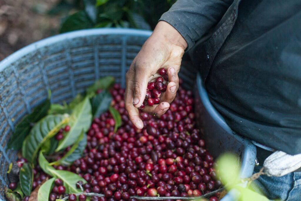 What's Coffee? How a Producer Travelled the Globe to Find Out