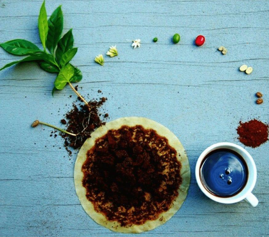 咖啡植物种类:阿拉比卡咖啡与特产罗布斯塔咖啡-咖报