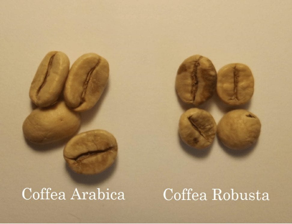 Africa Produces Robusta Coffee