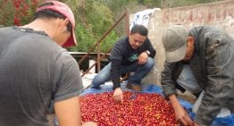How Can Ecotourism Promote Sustainable Coffee Production?