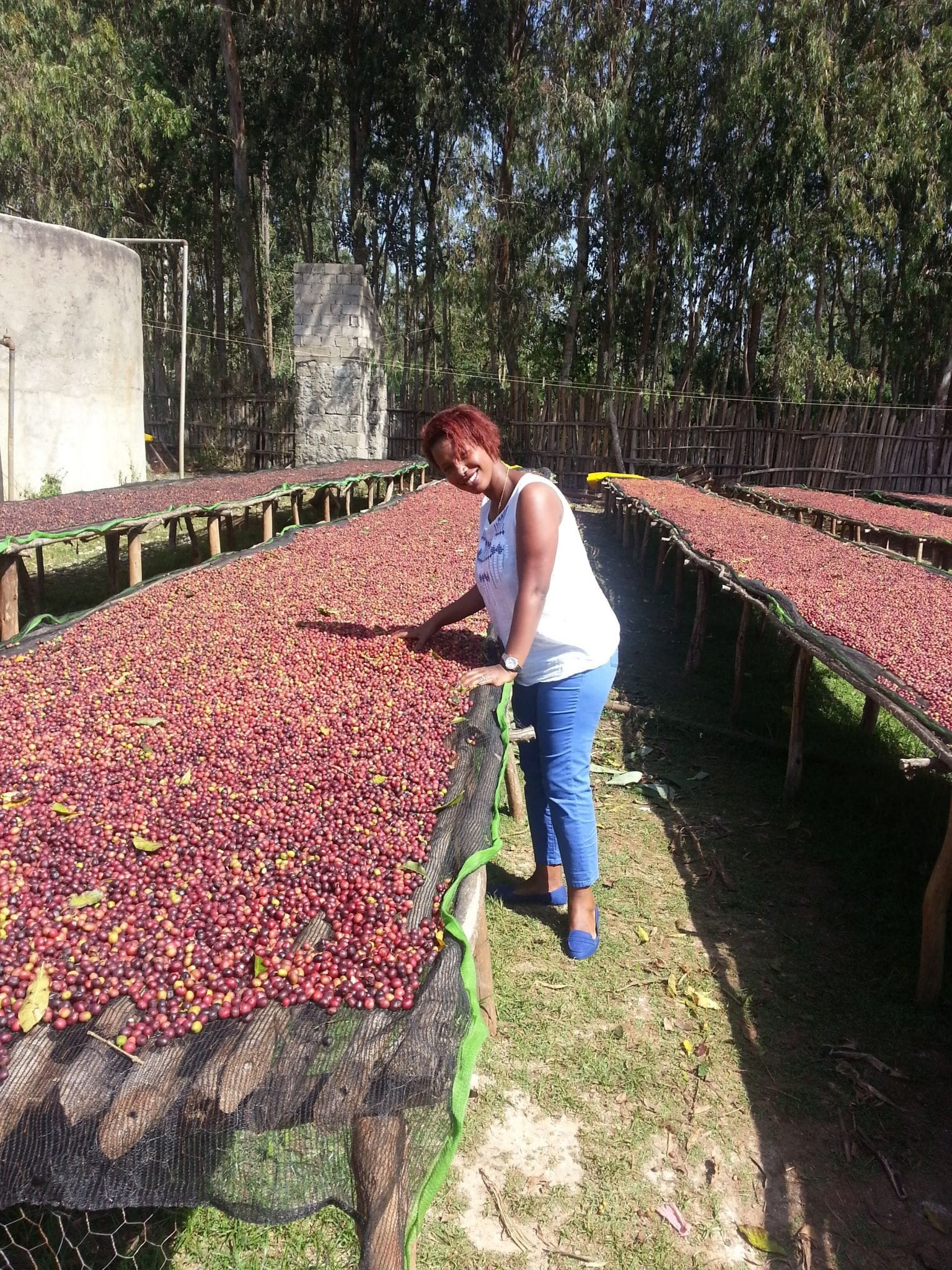 Beti Berhanu and the coffee drying beds