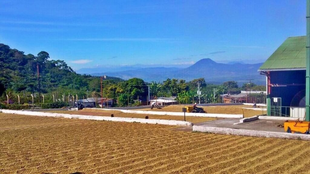 Single origin harvest on drying patio, Apaneca-Ilamatepec region, El Salvador.