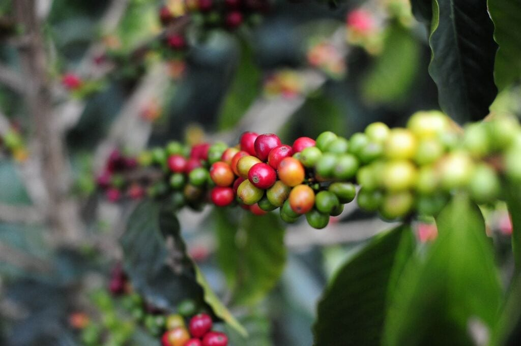 the significance of coffee in colombia Colombian spanish slang, colloquial colombian expressions, what's cool to say on the streets, immerse yourself in the culture by with our dictionary.