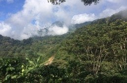 Interview: How Specialty Coffee in Honduras Rocketed to the Top