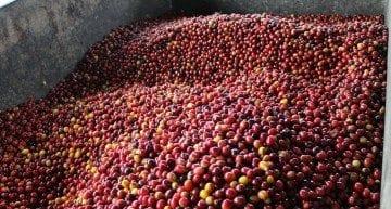 Specialty Coffee 101: Understanding Third Wave In 3 Short Videos
