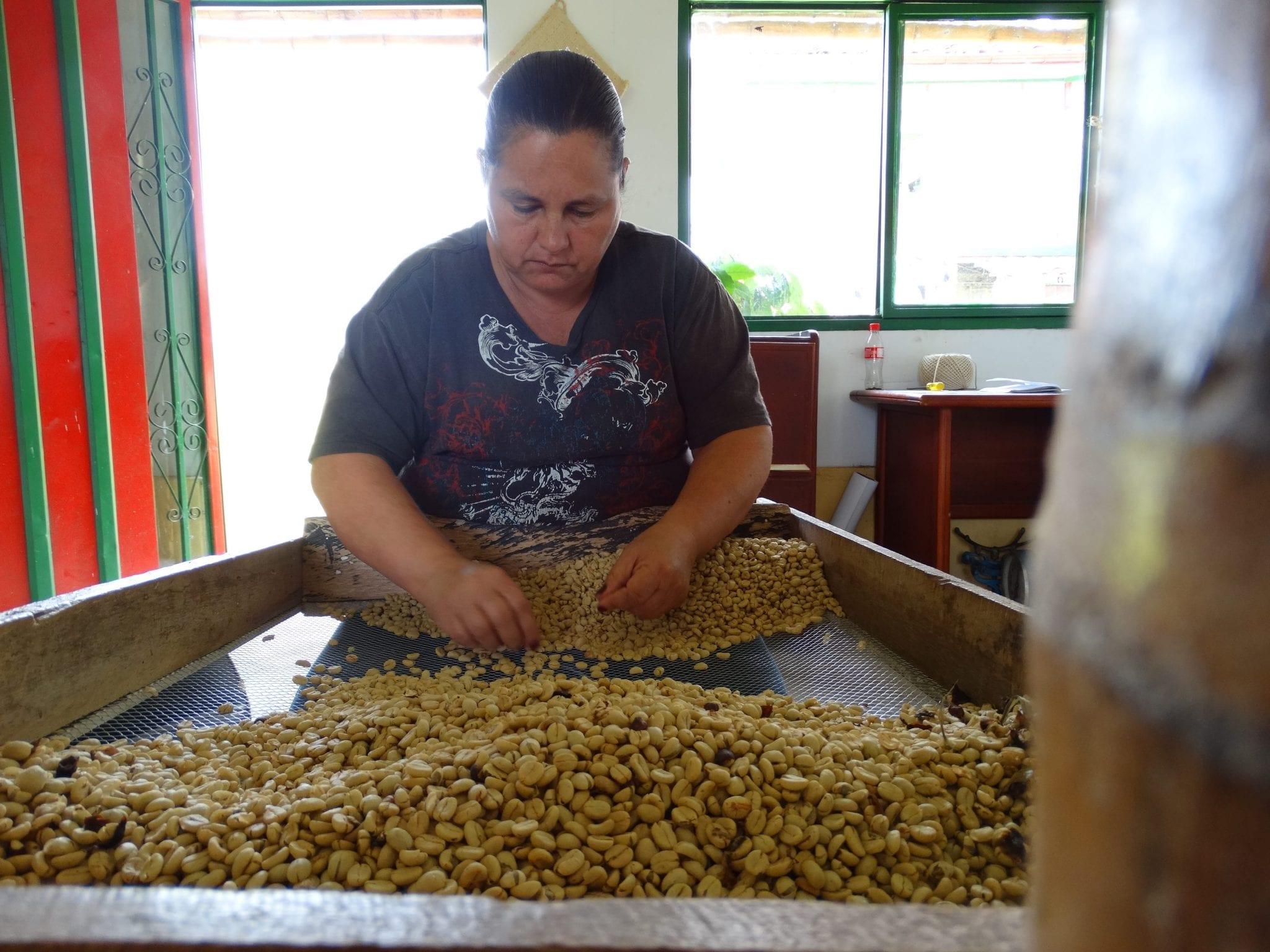 distribuyendo cafe