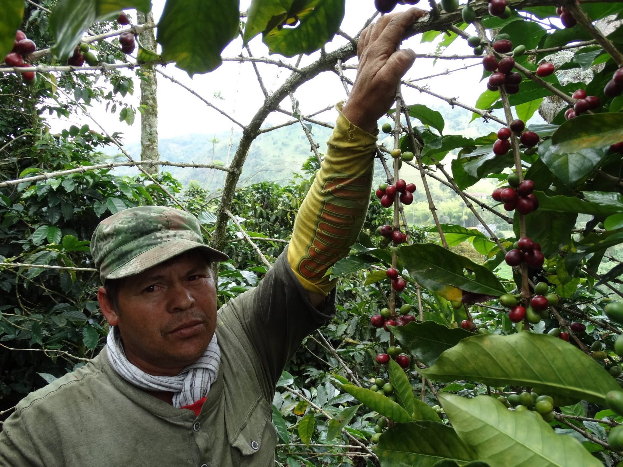 Coffee producer Jorge