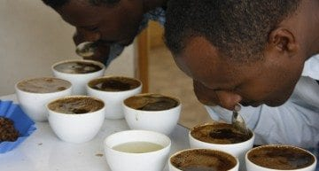 Coffee Videos: Do You Know How to Cup Coffee?