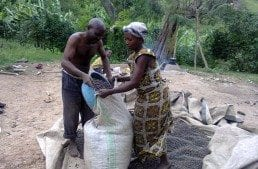 AFCA in Action: Tackling Gender Inequality in African Coffee Farming