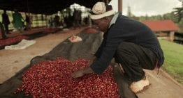 Inside the Kenyan Coffee Industry: 2 Eye Opening Videos
