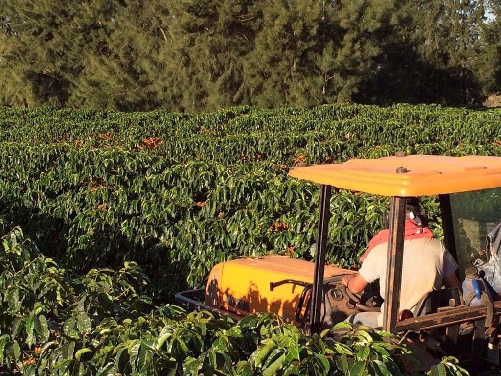 Farm ´Fazenda Esperança´ in Campos Altos, Minas Gerais