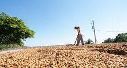 Microlotes de café Honey Vs Natural : 3 formas de Evitar la Contaminación del Agua