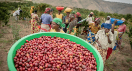 Value Creation in Rwandan Coffee: 3 Origin Vidoes