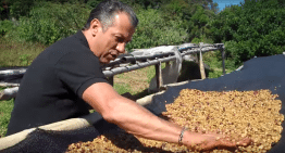 What is Honey Processing? Geisha Producer Explains in 180 Seconds