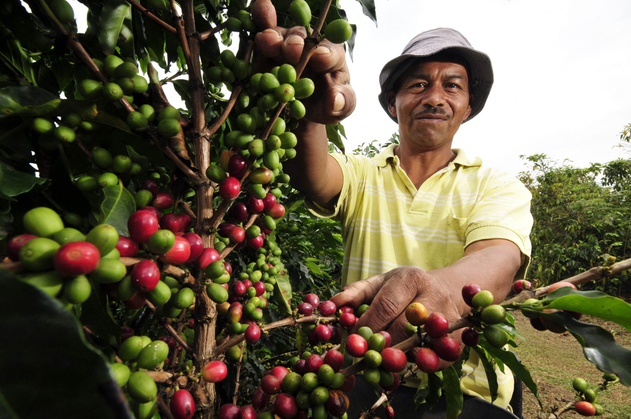 Does anyone know any case studys on an Ethiopian coffee farmer?