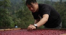 Barista Champion J. Zhang: Reinventing Specialty Coffee in China