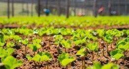 Guatemalan Coffee: Growing, Harvesting & Processing in 2 Videos