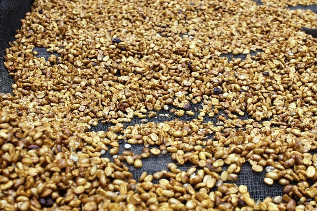 Honey processing up close