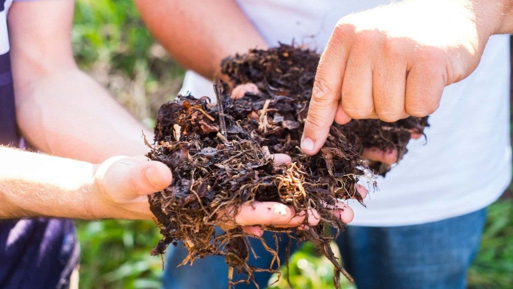coffee fertilizer in man's hands