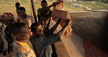 VIDEO: Ethiopian Coffee: Why is Working Together So Important?