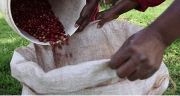 VIDEO: A Day in the Life of a Kenyan Female Coffee Producer