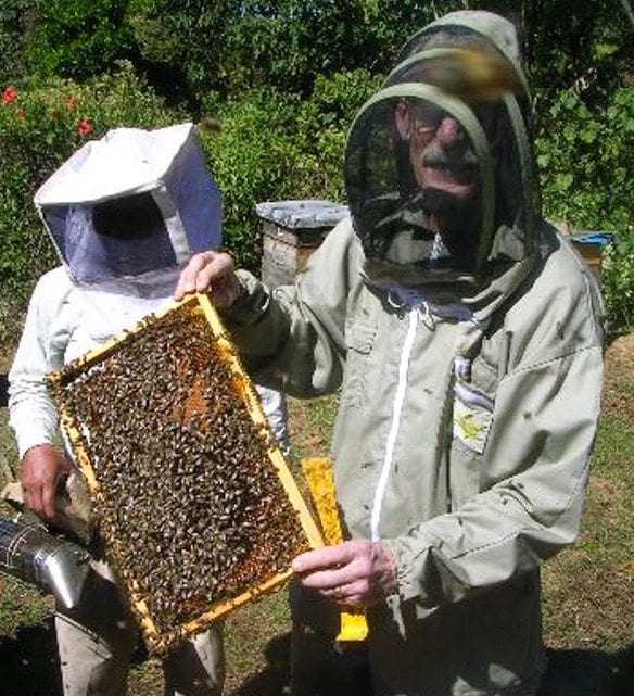 Beekeeper showing honeycomb