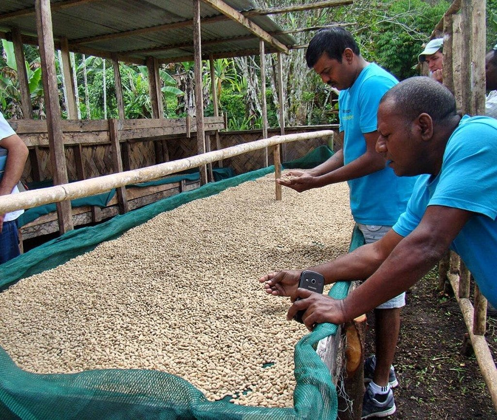 Coffee being inspected for quality
