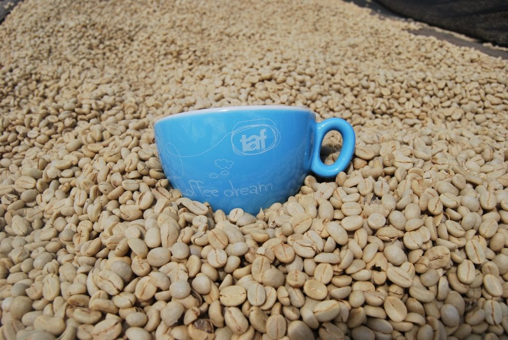 coffee cup in green coffee beans