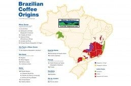 A Concise Guide to Brazil's Major Coffee-Producing Regions