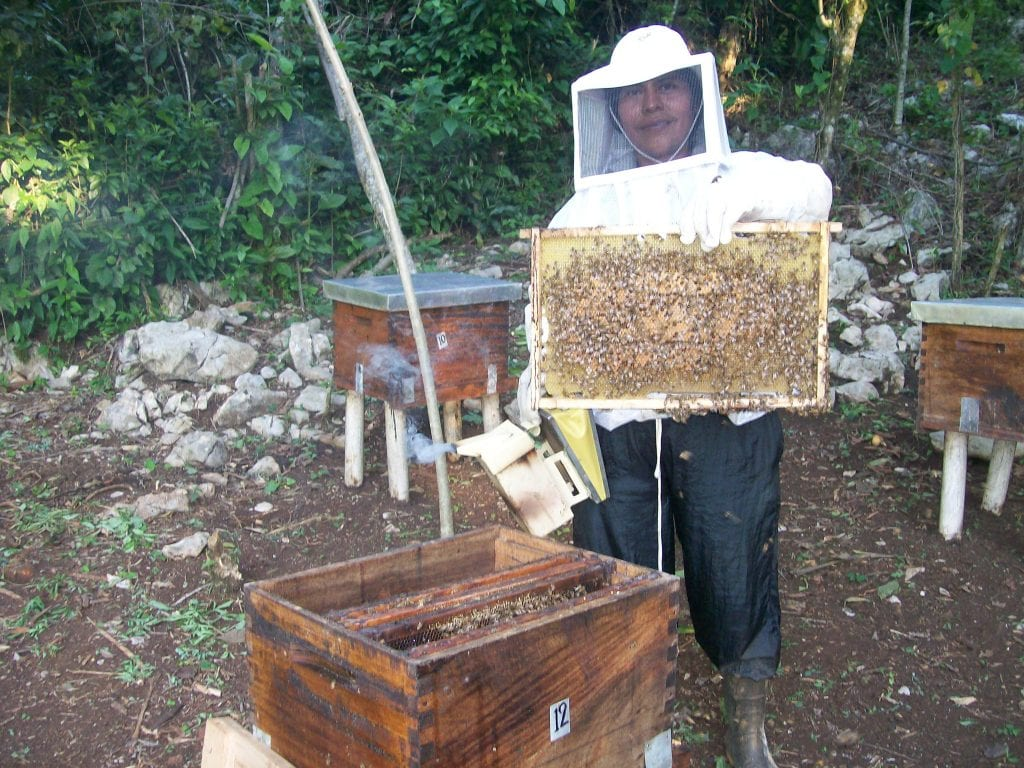 Maya Ixil Woman Beekeeper at work