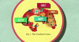 How Does Sugar Affect the Brain: A VIDEO Explanation