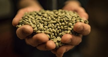 Roaster Life: 3 Steps to Finding a Specialty Coffee Producer in the Caribbean