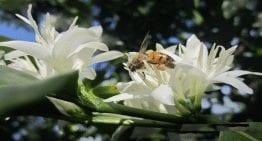 Caficultura y Apicultura en Latinoamérica: Un Camino Hacia la Seguridad Alimentaria