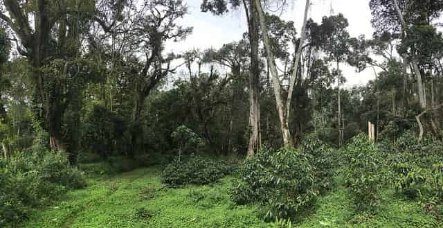 forest in Ethiopa