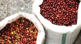 Steps Towards Specialty in Vietnam, Coffee's 2nd Biggest Producer