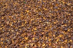 Coffee Processing: Understanding Pulped Natural Coffee