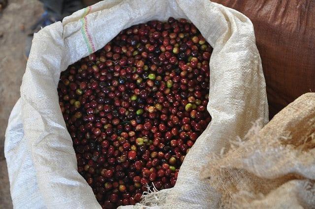 Ethiopia Guji beans.