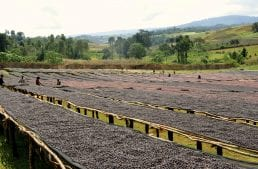 Direct Trade and the Ethiopian Commodities Exchange: What's the Problem?