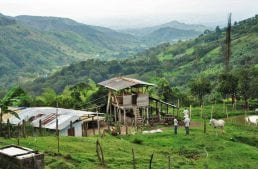 What Effect Does The C Market Have on Small Coffee Farmers?