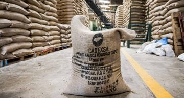 Under The Microscope: What Does a Coffee Exporter Do?