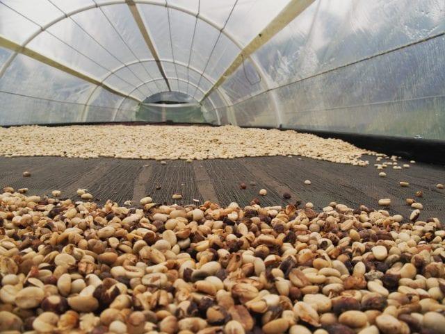 coffee greenhouse