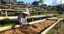 Proceso 101: Lavado, Natural Y Honey Producción de Café