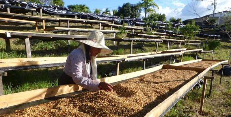 Washed, Natural, Honey: Coffee Processing 101